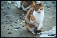 calico cat outside