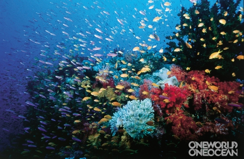 Coral_Reefs_(CRA)_w